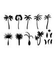 palm tree silhouettes exotic brazil tropical vector image