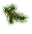 Pine branche vector image