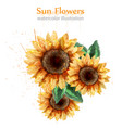 sunflowers watercolor style isolated on white vector image