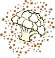cauliflower vector image vector image