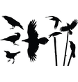 Crows silhouettes vector image vector image