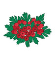isolated bunch of hawthorn with ripe red berries vector image vector image
