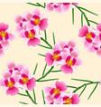 pink vanda miss joaquim orchid singapore national vector image vector image
