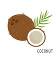 cartoon flat coconut isolated on white background vector image