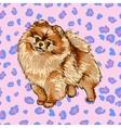 Pomeranian Spitz vector image vector image