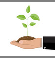 tree with leaves and soil in hand vector image