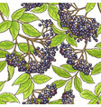 elderberry branch pattern vector image vector image