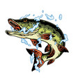 jumping pike fish in water splashes vector image vector image
