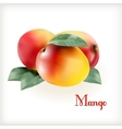 Ripe mango on the white vector image vector image