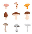 flat set of different kinds of mushroom vector image