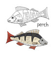 hand drawn perch fish black and white and color vector image