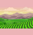 plantations tea in china mountain landscape vector image