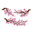 realistic sakura japan cherry branch with vector image