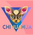 abstract dog chihuahua vector image vector image