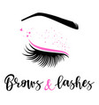 brows and lashes logo vector image vector image