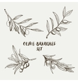 Graphic olive branches set vector image vector image