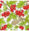 hawthorn branch pattern vector image