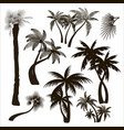 palms trees collection vector image vector image