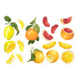 set with 3 types of citrus fruit in vector image