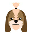 shih tzu avatar vector image vector image