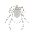 tick mite insect vector image