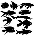 black set silhouette of aquarium fish on white vector image