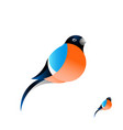 a beautiful red bullfinch with a red breast vector image