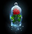 red rose under crystal dome vector image vector image