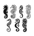 seahorse collection sketch for your design vector image