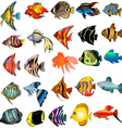Tropical fish set vector | Price: 1 Credit (USD $1)