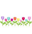tulip color border vector image vector image