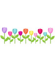 tulip color border vector image