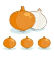 Onion on a white background vector image