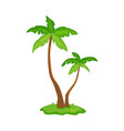 two palm trees with green leaves - cartoon vector image vector image