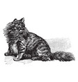 angora cat vintage vector image vector image