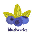 blueberries forest berry vector image