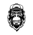 gorilla in baseball cap on white background vector image