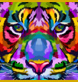 colorful tiger close up vector image vector image