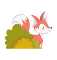 cute fox foliage bushes autumn on white background vector image