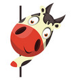 cow looking behind wall on white background vector image vector image