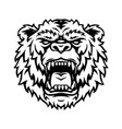 ferocious powerful grizzly head tattoo vector image