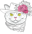 funny British cat lady vector image vector image