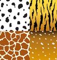 pattern animals vector image