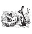rabbits and hares vintage vector image vector image