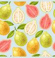 seamless guava fruits vector image vector image