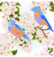 seamless texture small birds thrush bluebirds vector image vector image