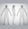 set of 3d wire frame human body vector image vector image