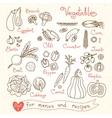 Set drawings of vegetables for design menus vector image