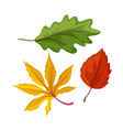 sketch autumn leaves set vector image
