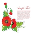 bouquet of poppies vector image vector image